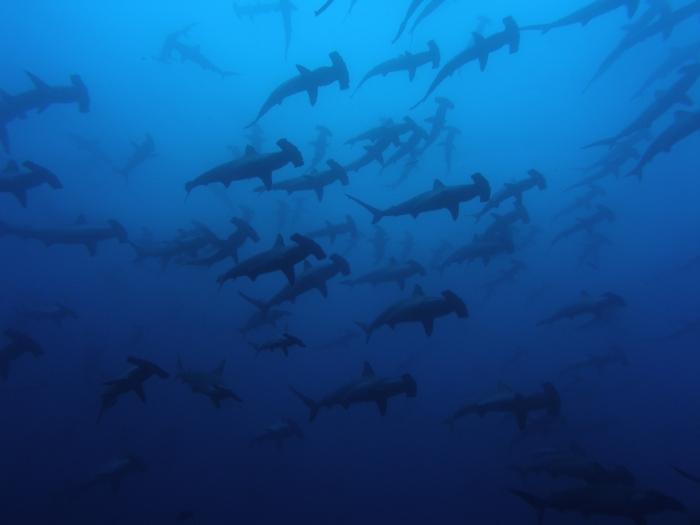 """La Isla de los Tiburones"""